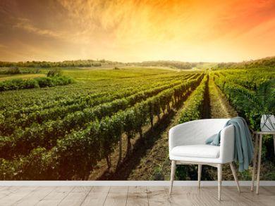 Beautiful vineyard with sunset sky