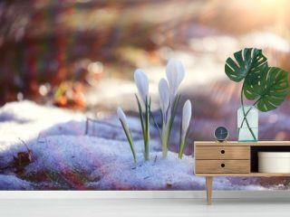 snowdrops crocus spring card