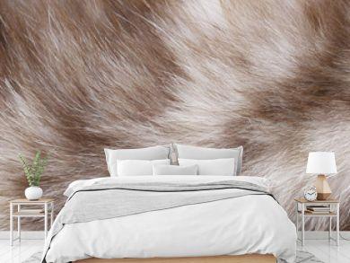 Cat fur texture closeup