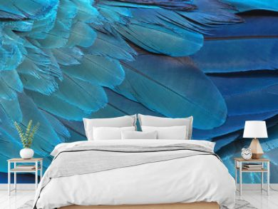 Colorful of blue and gold bird's feathers, exotic nature background and texture ,macaw feathers, wing macaw