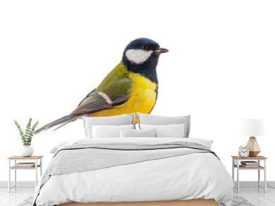 Tit bird isolated on white background