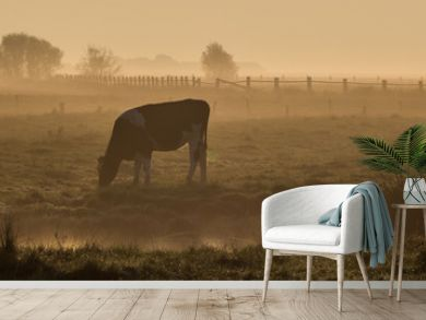 Panorama Kuh im Frühnebel auf dem Feld