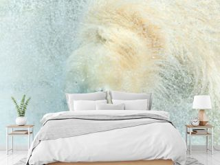 polar bear takes a bath