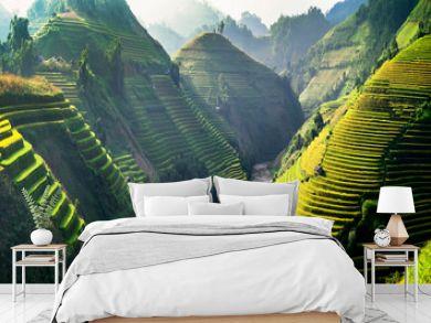 Rice fields on terraced in Northwest of Vietnam.