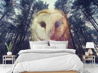 Double Exposure : Barn owl and Pine Forest at sunset . Abstract nature background