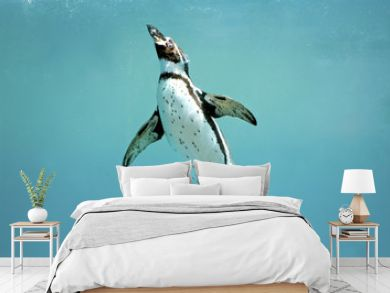 Humboldt penguin underwater swimming wings open looking