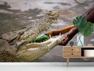 歯磨き中のイリエワニ