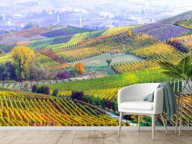 amazing vast plantation of grape in Piemonte- famous vine region of Italy