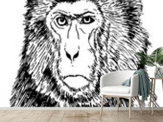 Graphical portrait of monkey isolated on white