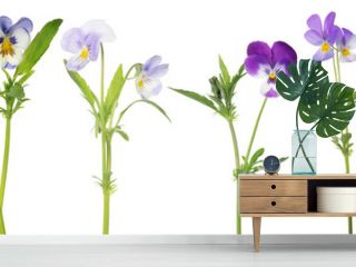 four pansy flowers set isolated on white