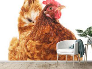 Brown chicken.