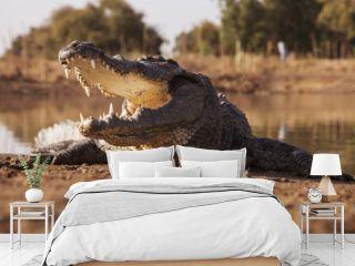 Feeding the crocodile