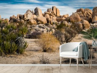 """""""Desert Art"""" The Mojave and Colorado Deserts transition in Joshua Tree National Park. The park is just east of Palm Springs in Southern California."""