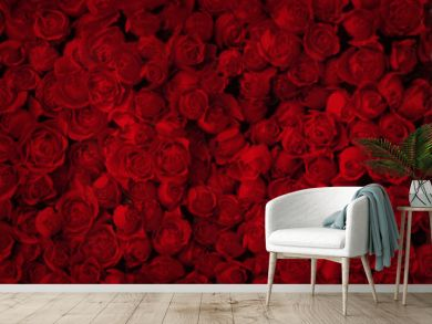 Red roses for background