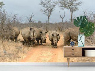 White rhinoceros in Hlane Royal National Park, Swaziland