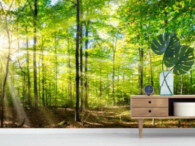 Grüner Wald im Frühling und Sommer