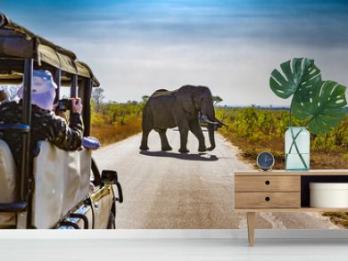South Africa. Safari in Kruger National Park - African Elephants (Loxodonta africana)