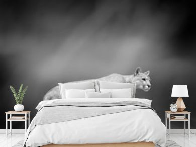 Black and white image of a puma