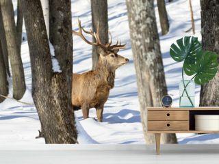 cerf rouge en hiver