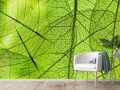 green foliage texture
