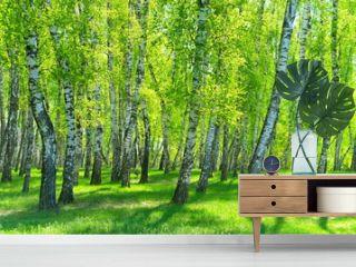 birch grove on a sunny day