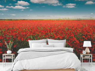 Field of red poppies against the blue sky scenic landscape