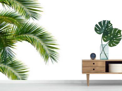 palme, palmwedel, palmblätter vor weißem hintergrund