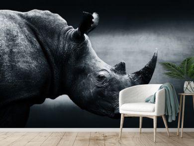 Highly alerted rhinoceros monochrome portrait. Fine art, South Africa. Ceratotherium simum