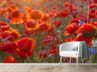 Poppy meadow in the beautiful light of the evening sun
