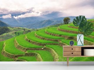Green terrace rice field with mountain background