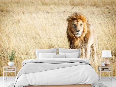 Lion in Kenya Africa With Copy Space