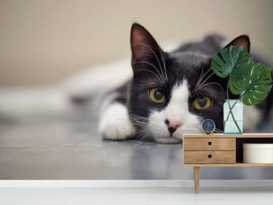 Portrait of a sad cat black and white color