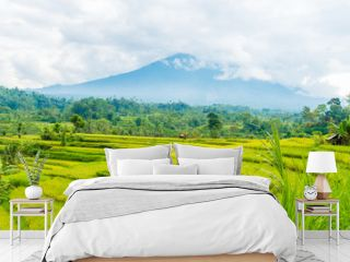 Green rice terrace fields in Bali, Indonesia