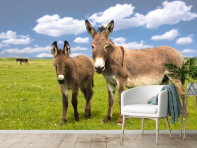 Mother and baby donkey on the meadow