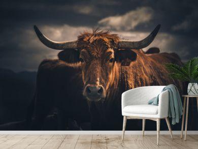 Vivid Bull