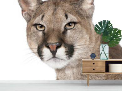 Close-up portrait of Puma cub, Puma concolor, 1 year old, studio shot