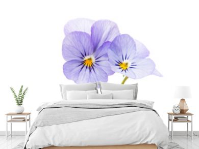 pansies isolated