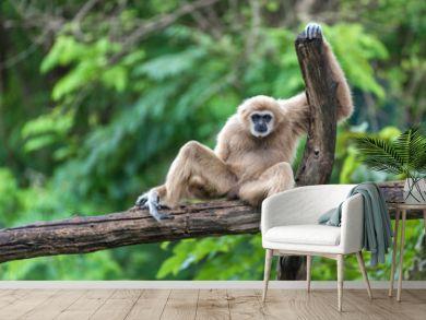 Portrait of a Monkey sitting on a log.
