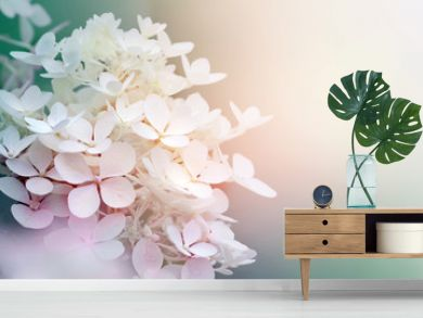 Abstract background of hydrangea paniculata flowers