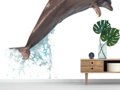 Jumping dolphin isolated