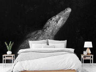 Crocodile swimming / black and white photography