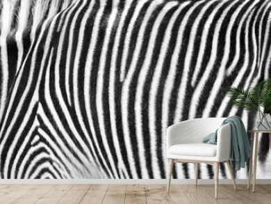 Zebra Print Black and White Horizontal Crop