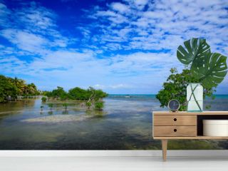Summer day in Caribbean. Mangrove tree islet viewed from the water surface, Mexico, Central America. Sea with blue sky. Holiday in Central America. Blue sky with green vegetation. Still water surface.