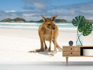 Kangaroo on Lucky Bay - Cape Le Grand National Park - Australia