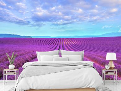 Lavender flower blooming fields endless rows. Valensole provence