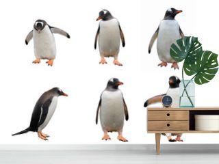 Gentoo penguin set isolated on white