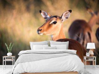 Antilope bei Safari in Südafrika
