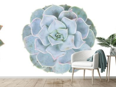 Succulent on white