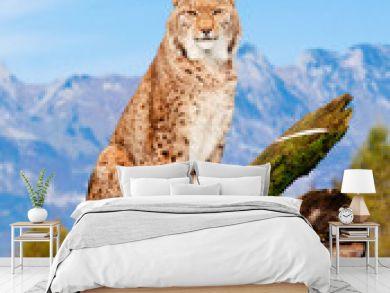 Lynx, Eurasian wild cat