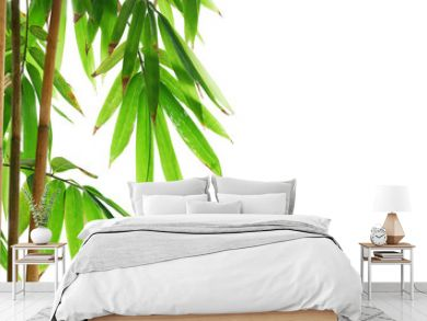 Green leaves of golden bamboo ornamental forest garden plant isolated on white background, clipping path included.